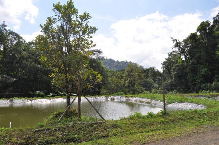 Piscinas - cultivos de Tilapia y Cachama